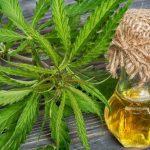 La Justicia ordenó habilitar aceite de cannabis para una paciente cordobesa