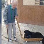 Un abuelo le fabricó un carrito a su perro enfermo que ya no podía caminar